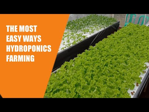 Floating Raft System The Most Easy Hydroponic Farming