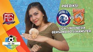 Prediksi AREMA FC VS BORNEO FC bersama PO si Hamster