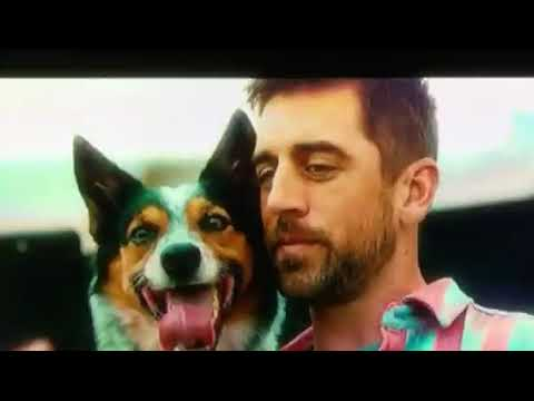 aaron rodgers state farm dog