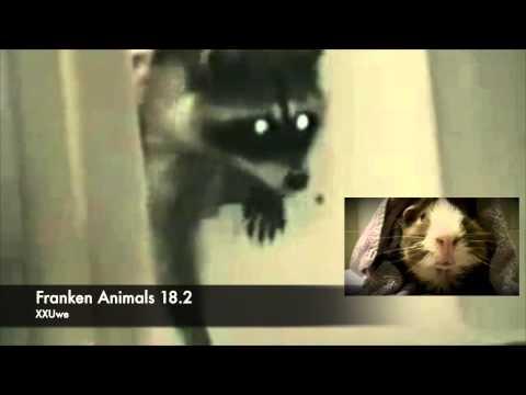 XXUwe - FRANKEN ANIMALS 18.2