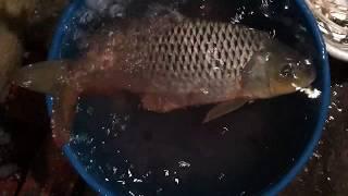 Mùa đông khoai cá ăn theo hôm và có hôm tát hồ, ai đam mê mới hiểu cảnh trời đày