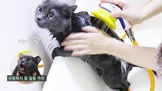 고양이 목욕 하는 날 …