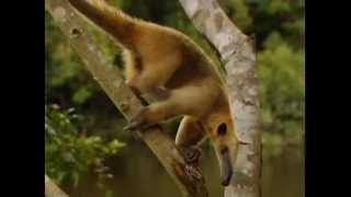BBC - Animal Weapons 1 - Tödliche Tiere in Sibirien - Film