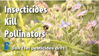 Insecticides Kill Pollinators - Don't Let Pesticides Drift