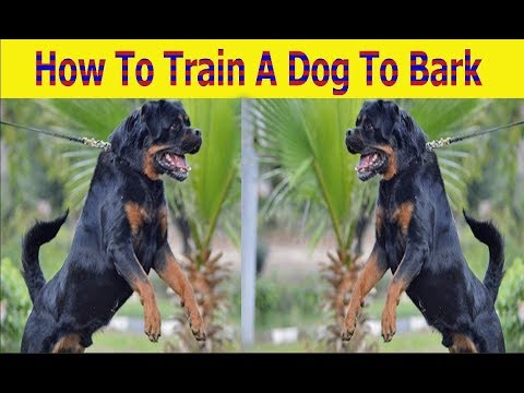 How To Train A Dog To Bark