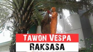 Tawon Ndas Raksasa Di Pohon Kurma Yayasan Putra Fatahillah Jalan Kramat Pulo Gundul