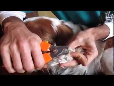 Come togliere i nodi dal pelo del mio cane - 6 passi