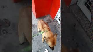La perrita Sari, rescatada por Patitas de Perro de una tremenda situación de maltrato