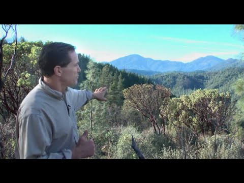 Geoengineering And The Dying Of The Trees ( Dane Wigington GeoengineeringWatch.org )