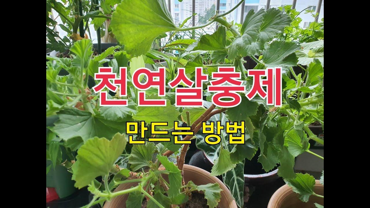 (화초와 식물키우기 ) 집에서 초간단 친환경 천연살충제 만들기 #Making eco-friendly natural insecticide
