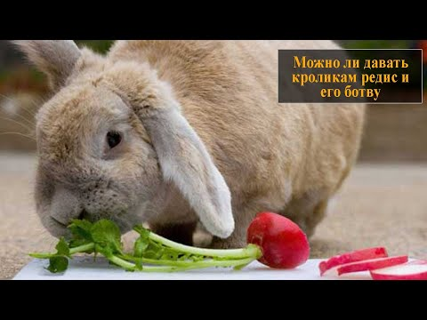 Можно ли давать кроликам редиску
