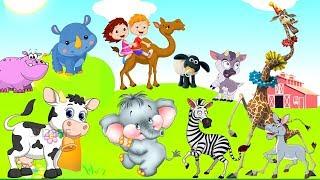 Suara binatang lucu untuk anak anak | Nama dan suara herbivora(sapi, kambing, kuda, gajah, badak,)