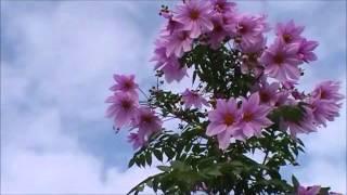 万有引力にもめげず、スクスクと育ち綺麗な花を咲かせ、気高く品も良く ...