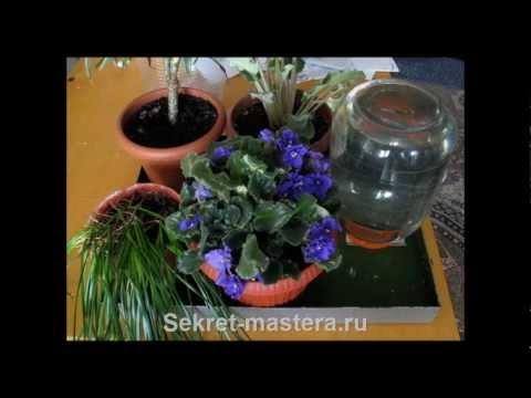 Как сделать автополив комнатных растений