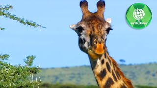 WILDLIFE IN SERENGETI | PART 1 | SD QUALITY | EN