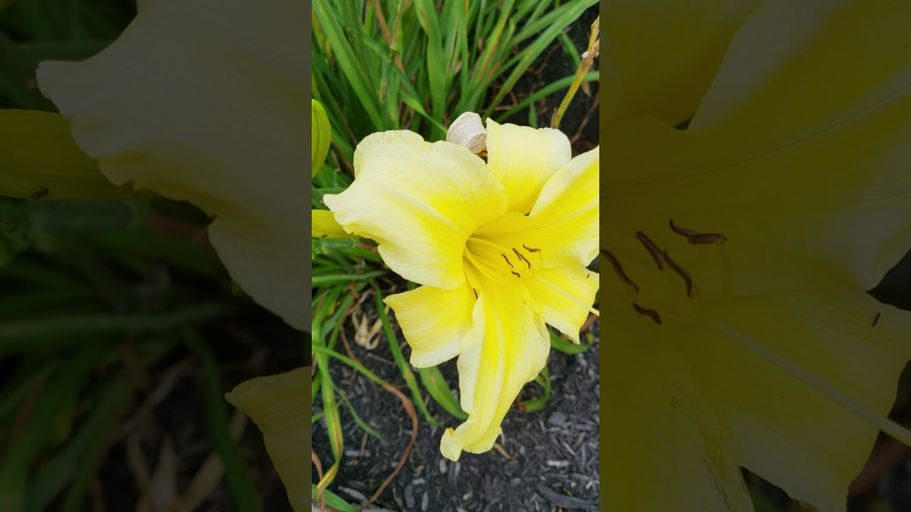 Lilies Getting Seeds Part 2harvesting Seeds Why Wait Till Pods