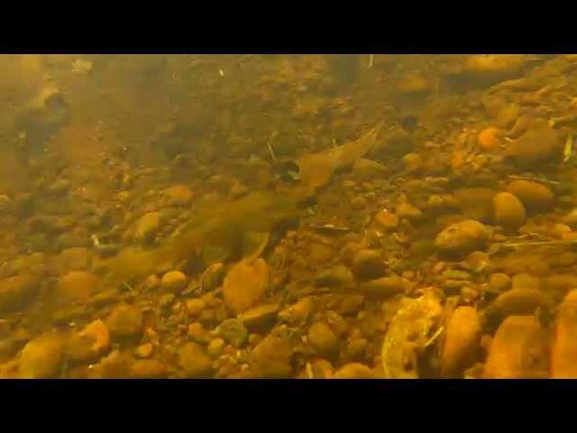 Peces del Arroyo Yerbas Paraíso