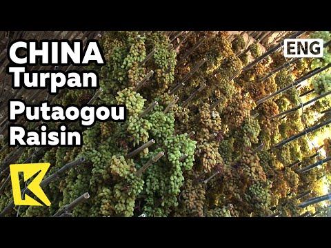 【K】China Travel-Turpan[중국여행-투루판]세계 제일 건포도 생산지, 푸타오거우/Putaogou Raisin/Local Life/Grape