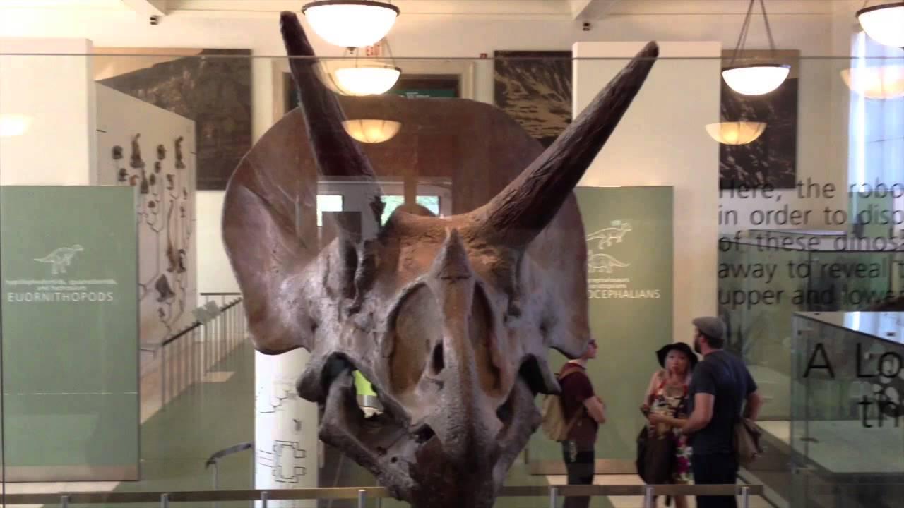 Huesos De Dinosaurio Youtube Los dinosaurios (dinosauria, del griego δεινός deinos 'terrible' y σαῦρος sauros 'lagarto': huesos de dinosaurio