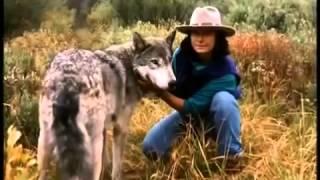 Leben mit Wölfen - Dokumentation zweier Menschen, die über Jahre hinweg Wolfsrudel beobachteten.