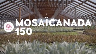 MosaïCanada 150 thumbnail