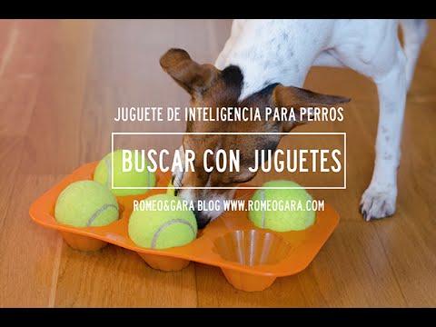 Juego De Inteligencia Casero Para Perros Youtube