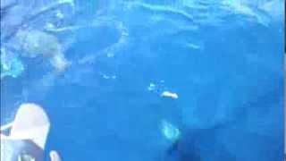 Delfini in Croatia
