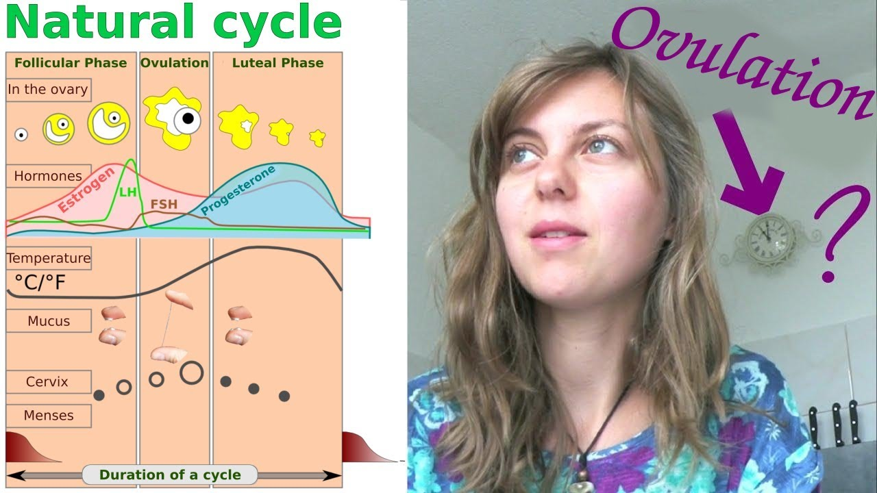 Ovulation what spotting is What Is