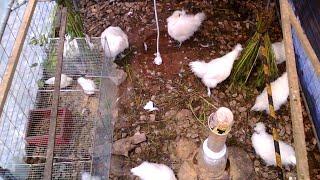 닭집에 병아리 입주  …