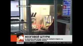 В Нижнем Новгороде сделали думающего робота