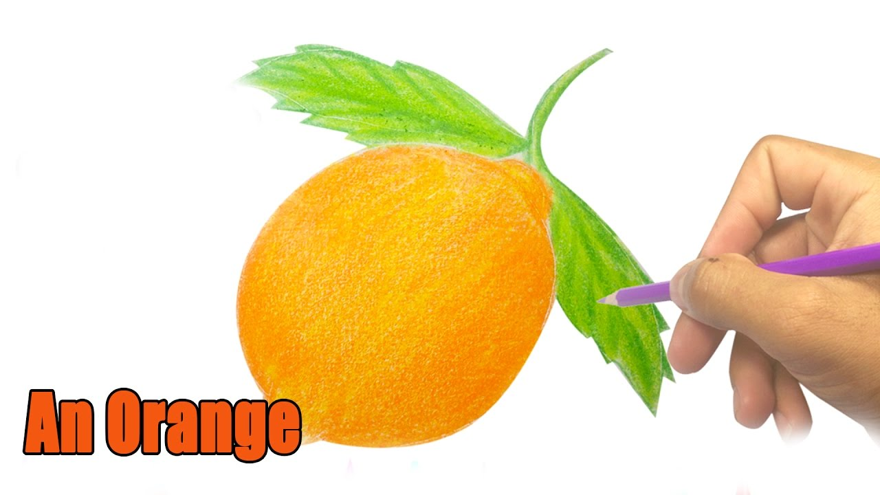 How to draw an Orange - Drawing interesting Fruit videos - YouTube for Drawing Orange Fruit  66pct