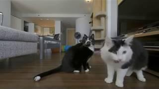 Cats Eating Treats  VR180