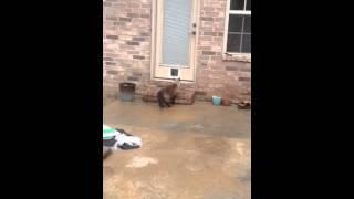 Epic Cat Door Fail, Part 1