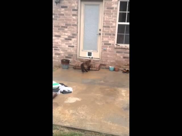 Epic Cat Door Fail [ORIGINAL; Part 1 ]