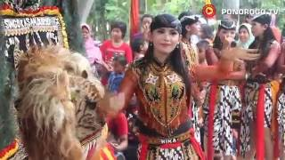 Reog Ponorogo Di Bungu Bungkal, Di Meriahkan Jathil Cantik, Naik Dadak Merak, Jathilan, Edrekan