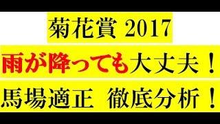 菊花賞2017 雨が降っても大丈夫!【馬場適正】徹底分析!