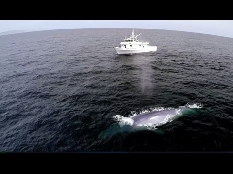 Blue Whale's Perfect Comic Timing! | Big...