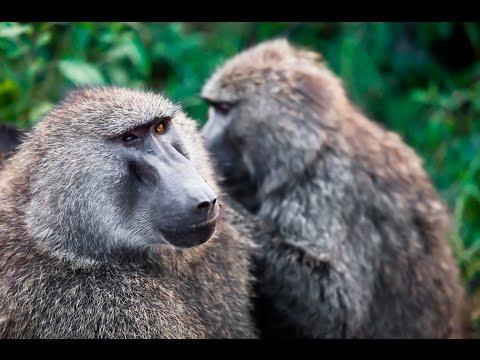 Смешные истории про животных в зоопарке