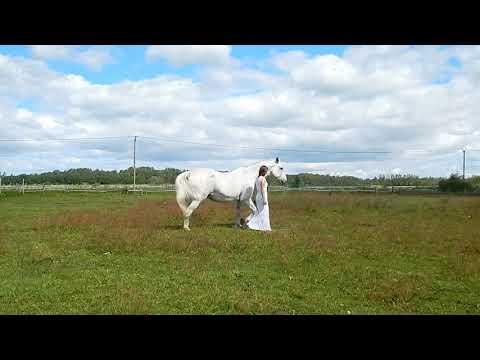"Танец с лошадью ""Летнее настроение"". Школа ""AjiLiberty"". Liberty Training Horses. Tatyana Burdina"