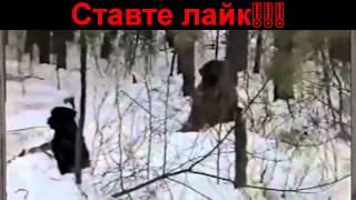 Смешное видео - приколи охота!!