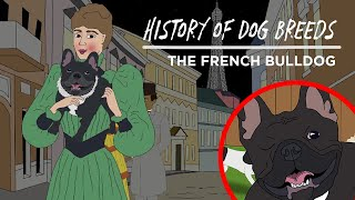 History of Dog Breeds: THE FRENCH BULLDOG!