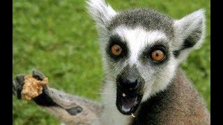 Животные в каменных джунглях | Черкасский зоопарк