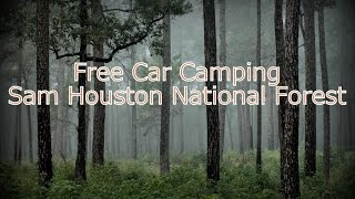 FREE Texas Car Camping: Sąm Houston Natl Forest-Car Camping Sites on FS220