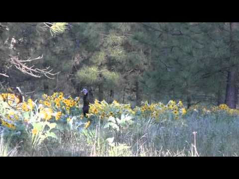 Turkey Hunting Spokane WA #34, The best of 2014