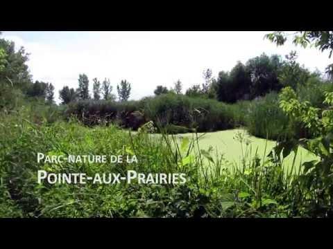 Park Pointe aux Prairies, Montreal - Summer 2014