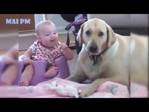 Labrador dog and baby play together   Funny dogs and babies videos