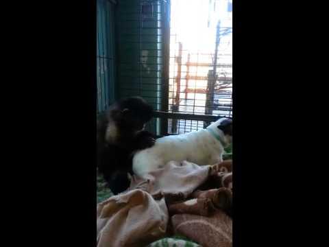 Monkey grooming dog