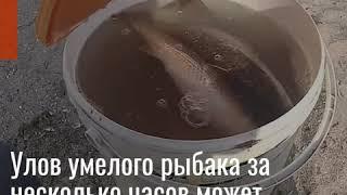 БЕРДЯНСК РЫБАЛКА НА ПЕЛЕНГАСА 2020