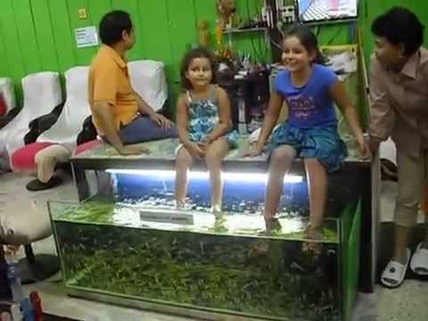Doctor fish cleaning human feet in chiang mai thailand for Fish cleaning feet