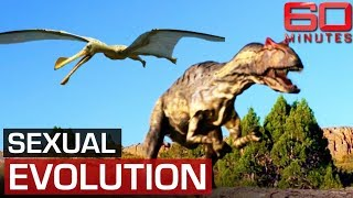 Do dinosaurs prove Australians invented sex? | 60 Minutes Australia
